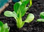 Dịch vụ trồng rau sạch ở Hải Dương