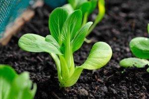 Cung cấp hạt giống, phân bón, đất sạch toàn quốc